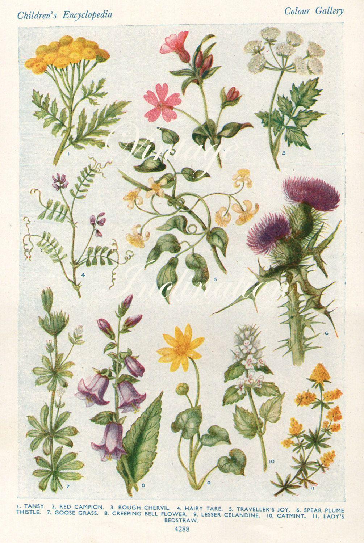 Bells Original Antique lithograph Flowers Signed.