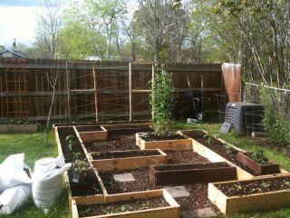 Pin On Gardening Plants