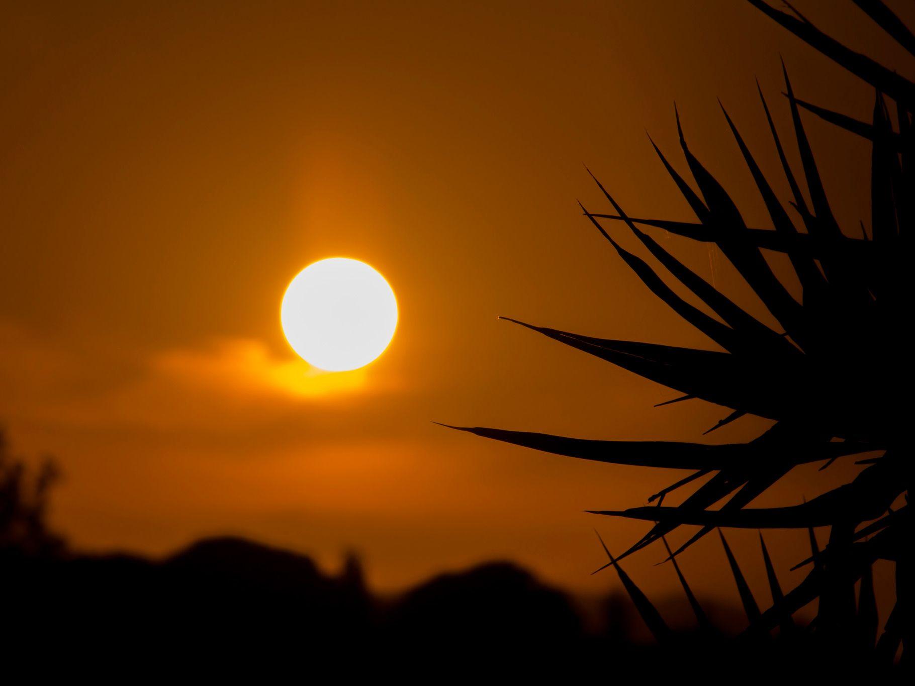 Enjoy the Sunset in Pelekas