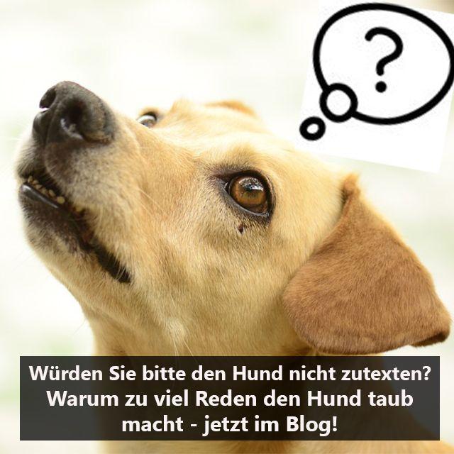 Wurden Sie Bitte Den Hund Nicht Zutexten Warum Wir Viel Zu Viel Mit Unseren Hunden Sprechen Wieso Das So Oft Schief Geht Und Hunde Sprache Hunde Hundesprache