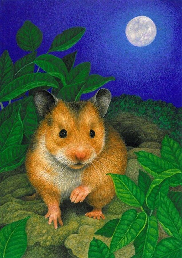 Avril Haynes — Hamster (637x900) Fun illustration, Funny