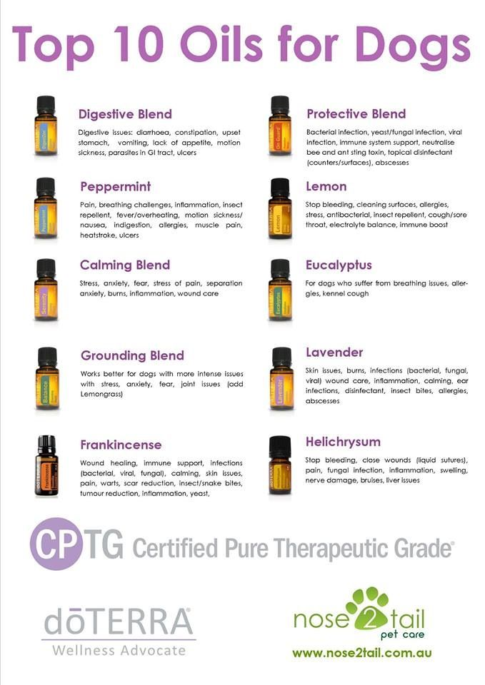 Top Oils For Dogs Dottera Essential Oils Dogs Are