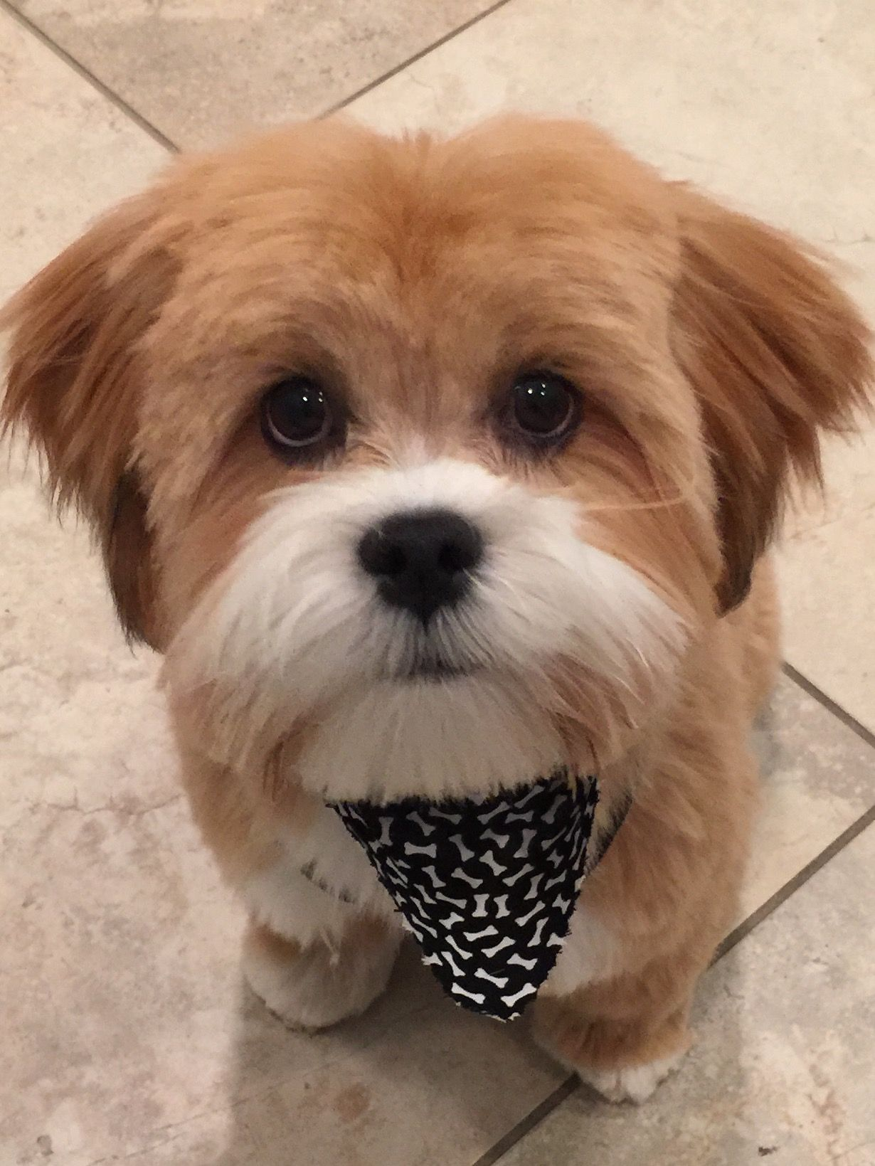 Just groomed!