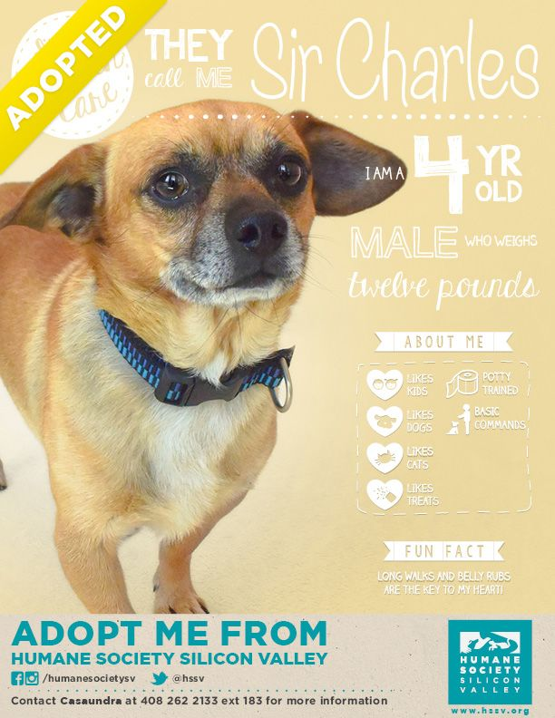 Sir Charles Chugsalot Has Been Adopted Dog Infographic Foster Dog Dog Adoption