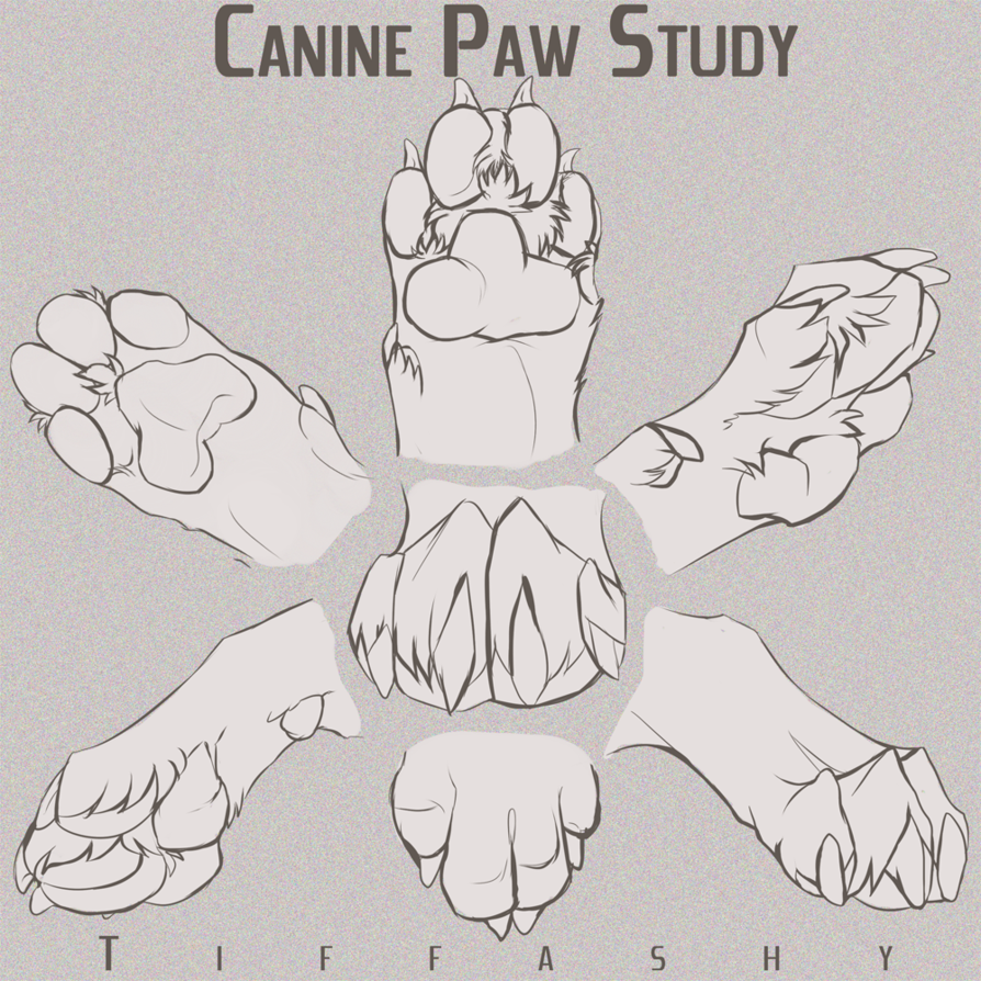 Photo of Canine Paw Study/Angles/Tutorial by TIFFASHY on DeviantArt