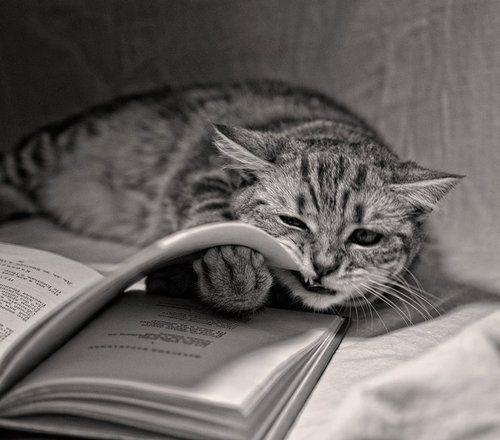 Yo ahora. No queriendo estudiar.