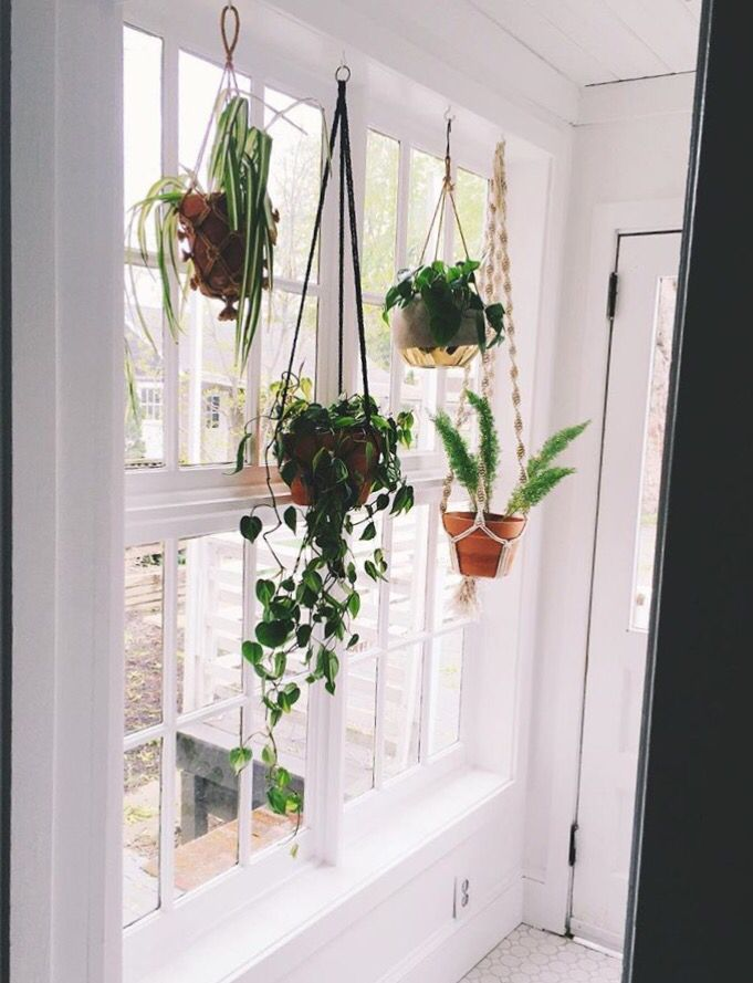 pin by jessica on apartment home in 2019 pinterest hanging plants plants and window plants. Black Bedroom Furniture Sets. Home Design Ideas