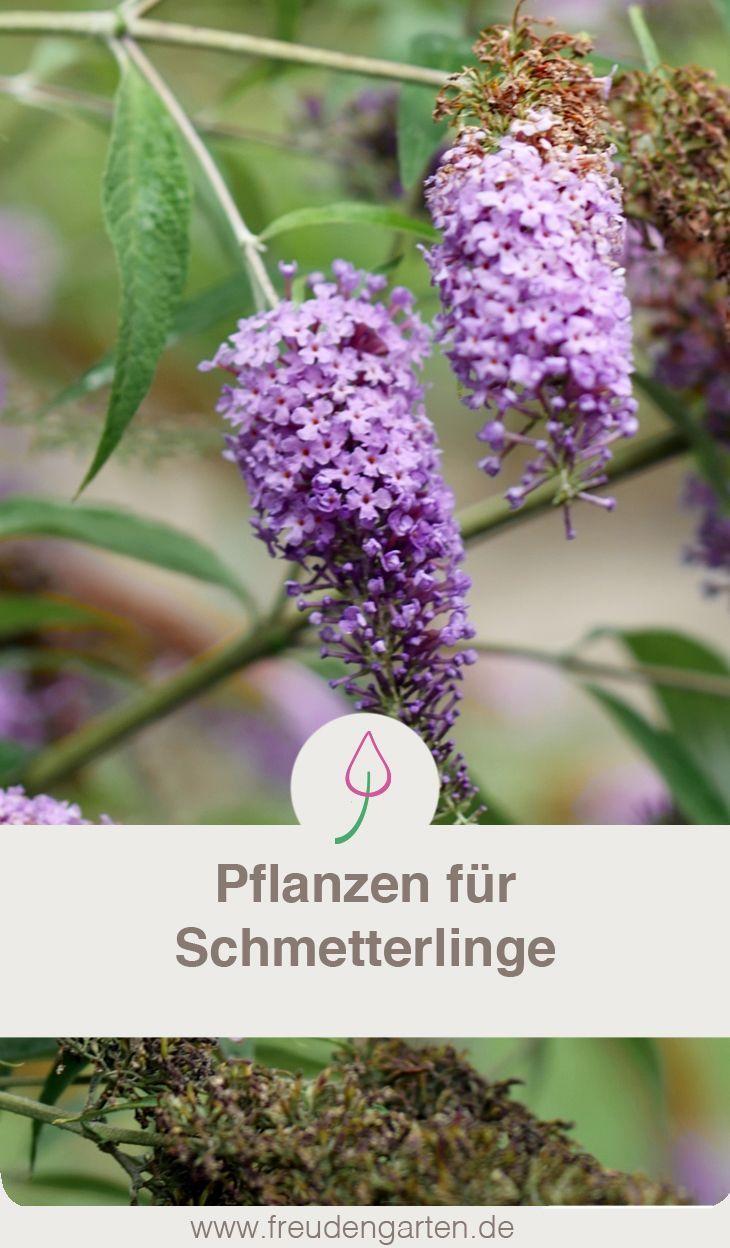 Plants For Butterflies Mit Bildern Pflanzen Schmetterlingspflanzen Garten Pflanzen