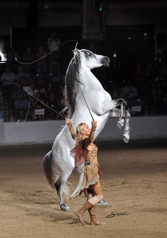 Sylvia Zerbini Performing Her Grand Liberty At U S Nationals Oct 25 27 Sponsored By Markel Insurance Arabianhorses Arabianhorseas Horses Animals Equines