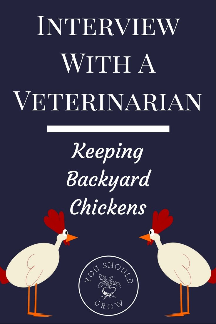 Interview With A Veterinarian: Keeping Backyard Chickens