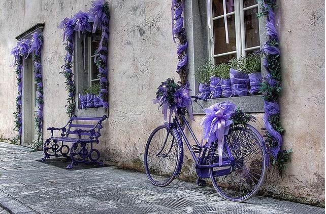Never Enough Lavender