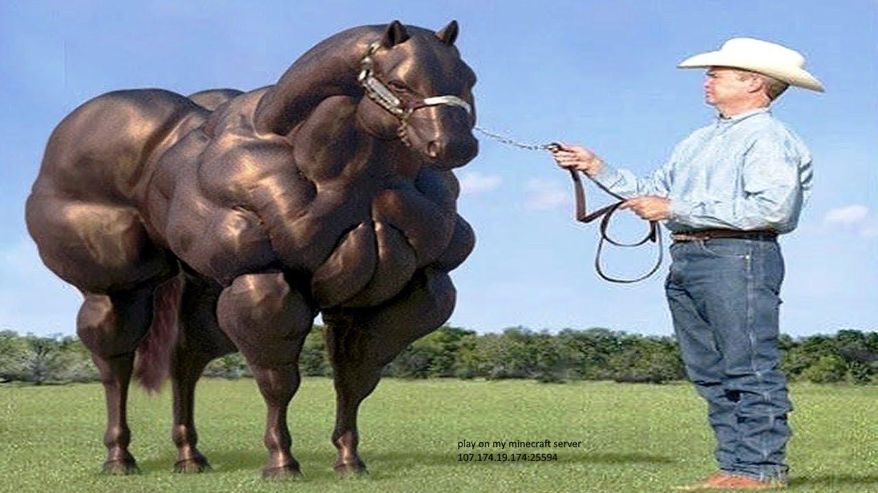 Buff horse Largest horse breed, Horse breeds, Big horses