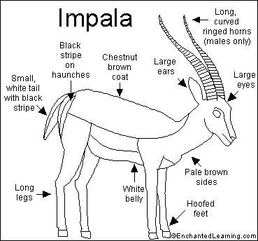 Okapi coloring page! :) | My Style | Pinterest | Okapi and ...