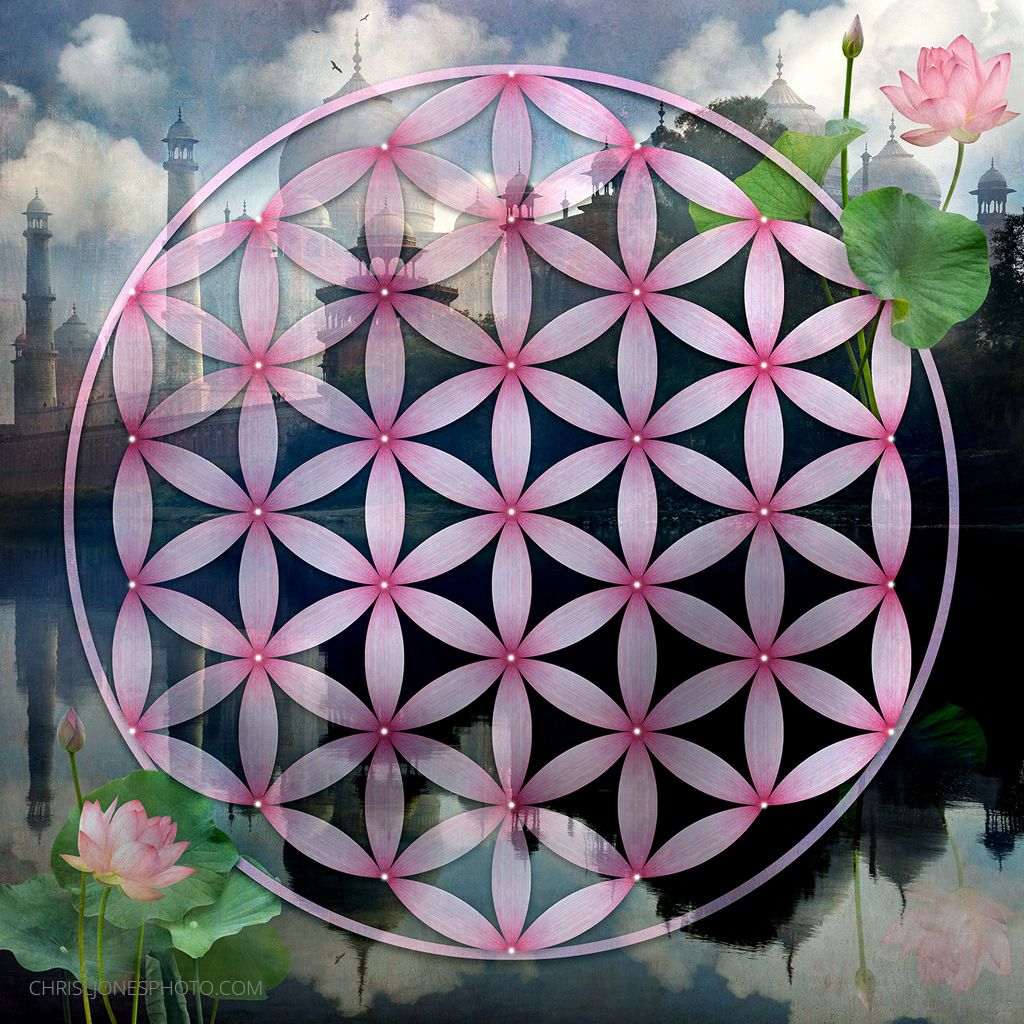 The Flower Of Life With A Taj Mahal Background And Lotus Flowers