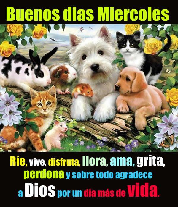 Imagenes De Buenos Dias Miercoles Chistes Frases Con Fotos