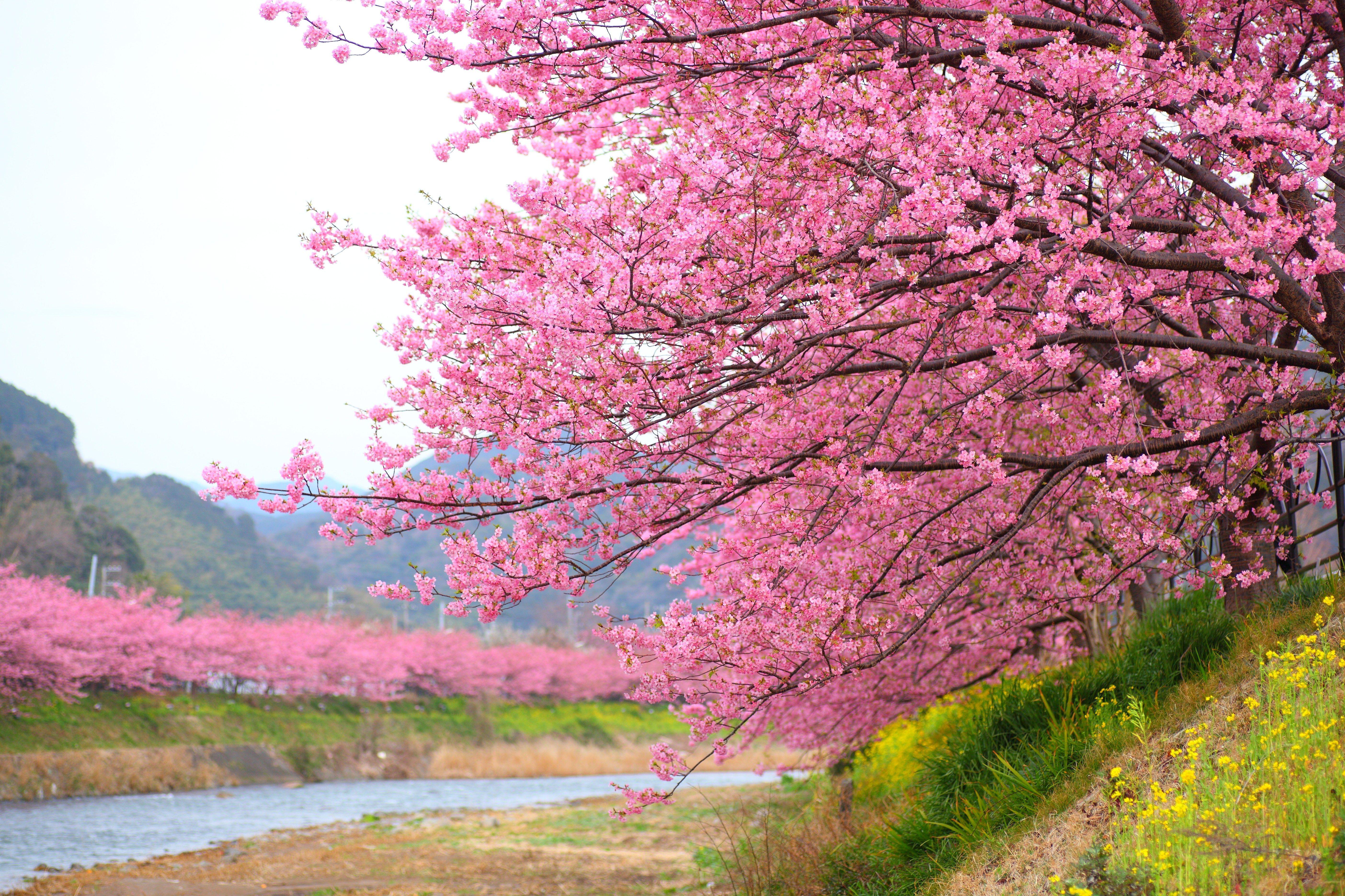 The Best Cherry Blossom Sightseeing Spots In Tohoku Travelife Magazine Spring Scenery Cherry Blossom Japanese Garden