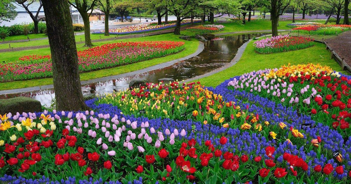 Foto Pemandangan Taman Bunga Yang Indah 5 Taman Bunga Di Belanda Yang Paling Indah Dan Mempesona Enaknya 16 Taman Bunga Di 2020 Taman Indah Bunga Tulip Pemandangan