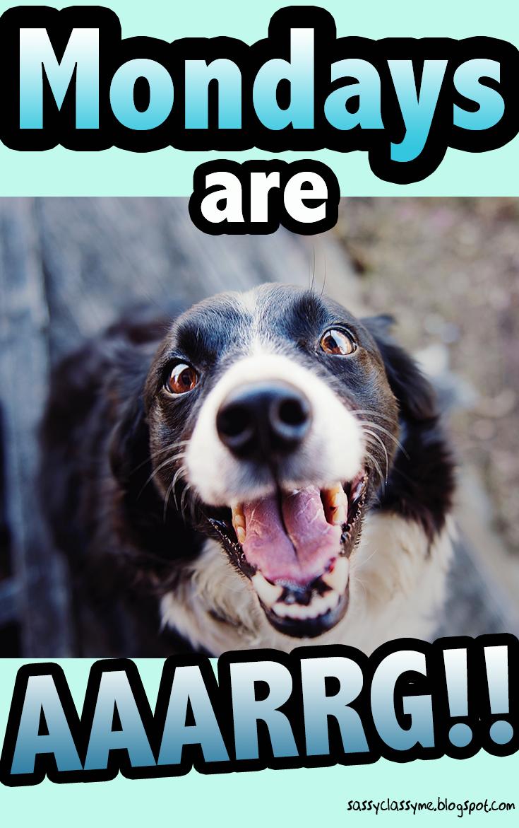 Animal Memes 🐦 'Mondays are... AAARRGG!!' 🐶 animals