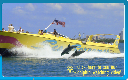 Dolphin Watch Boat Tours Clearwater