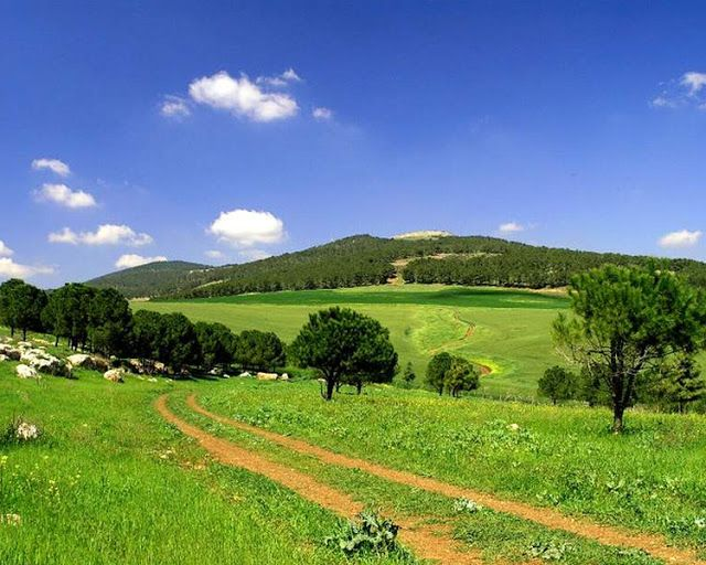 Green Israel - The most beautiful scenery in the world - Free - new world time map screensaver free download