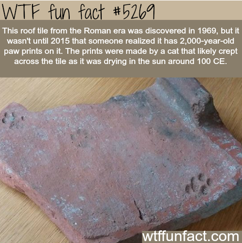 Cats Haven T Changed Post Fun Facts Wtf Fun Facts Weird Facts
