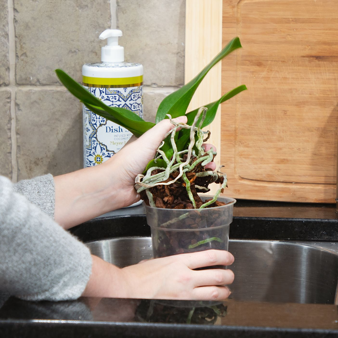 It S Time To Repot Your Orchid If You Ve Had It For 1 2 Years Or The Media Starts To Break Down And Give Off An Odor Everythin Buy Orchids Orchids Orchid Care