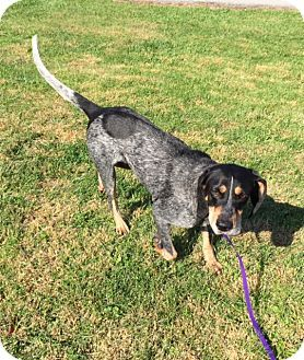 Washington Dc Bluetick Coonhound Mix Meet Delilah A Dog For