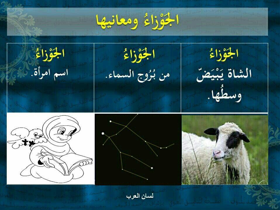 فوائد لغوية معاني كلمة الجوزاء في اللغة العربية