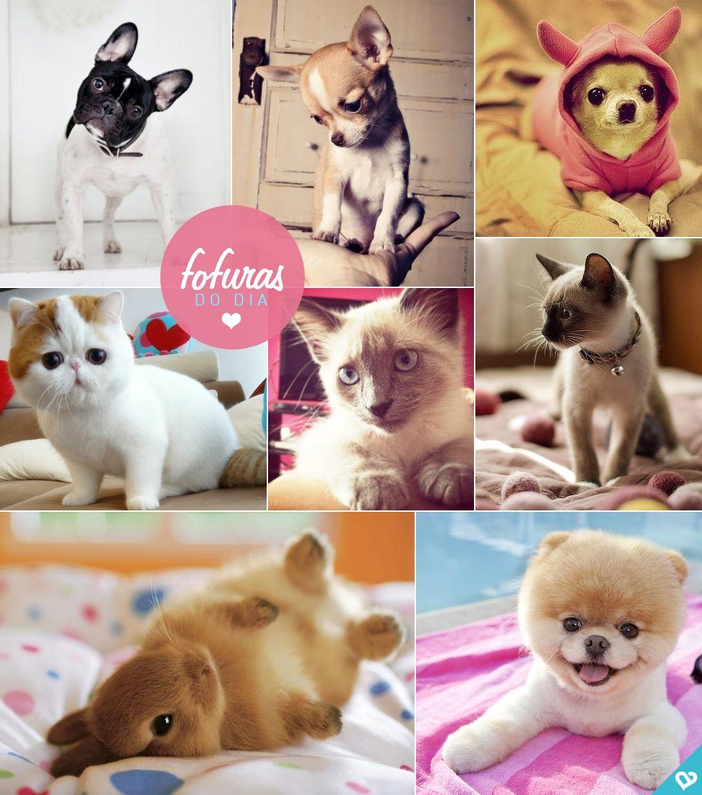 animal cute @amorume