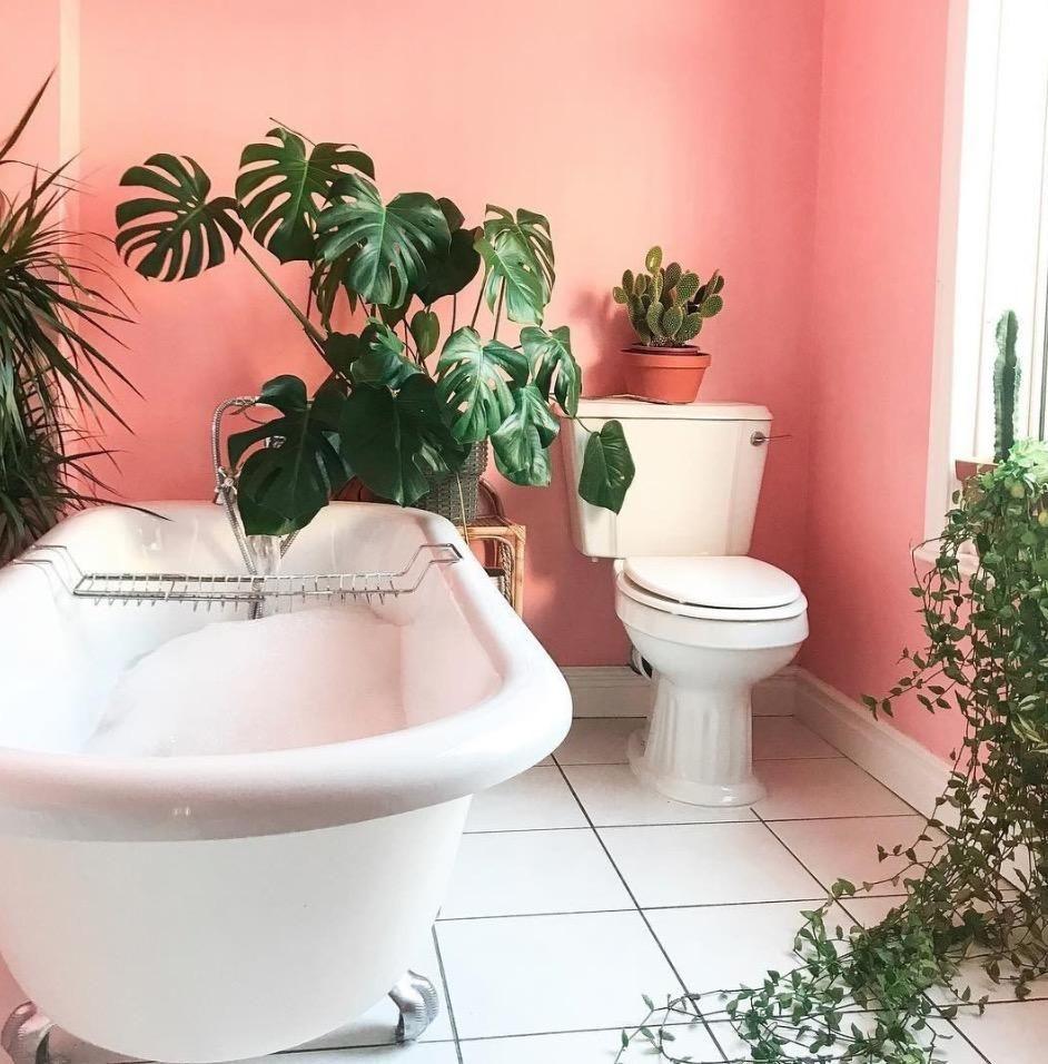 Plante Pour Salle De Bain Sombre 23 plantes vertes pour végétaliser la salle de bains | salle