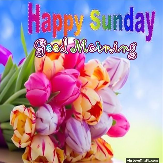 Colorful Sunday Good Morning Flowers Quotes Good Morning Flowers