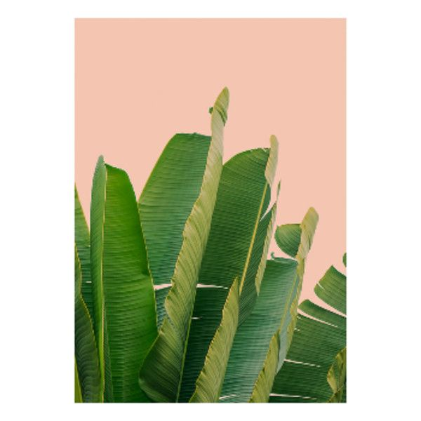 46+ Framed banana leaf print trends