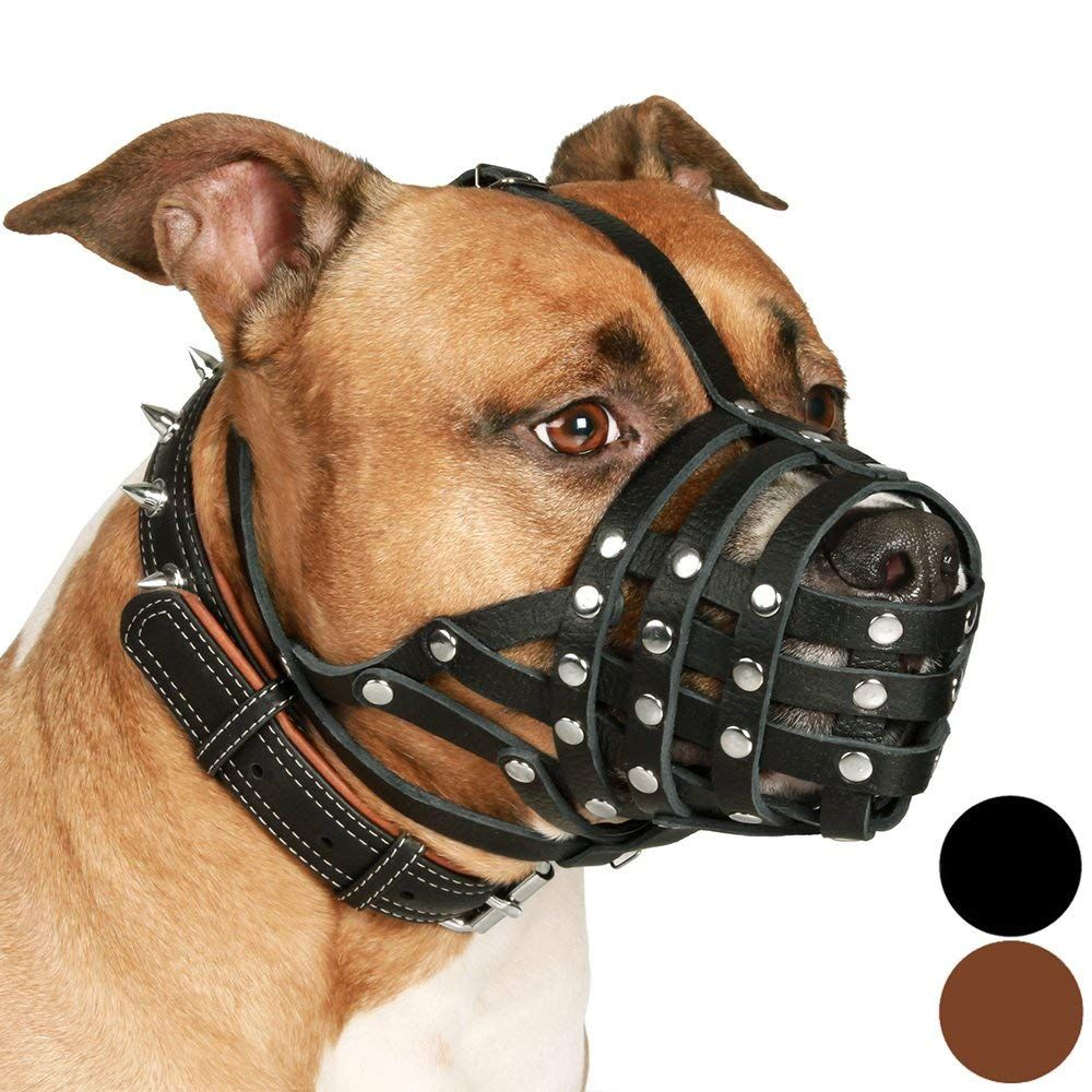 The Best Muzzle For Pitbulls Reviews Top 5 Picks In 2020