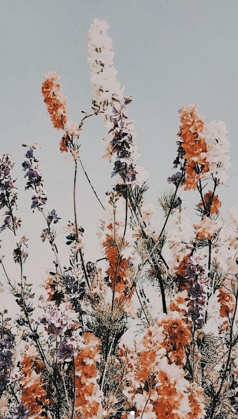 Boho Flower Background Flower Phone Wallpaper Pretty Wallpapers Iphone Background Wallpaper