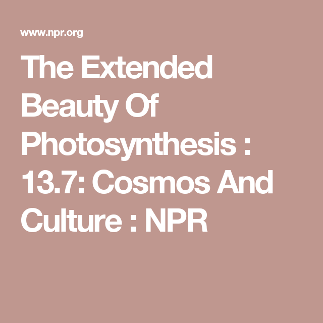 The Extended Beauty Of Photosynthesis : 13.7: Cosmos And Culture : NPR