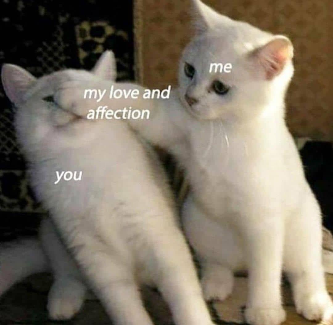 No Text Funny Cat Pictures Cat Pics Funny Cats