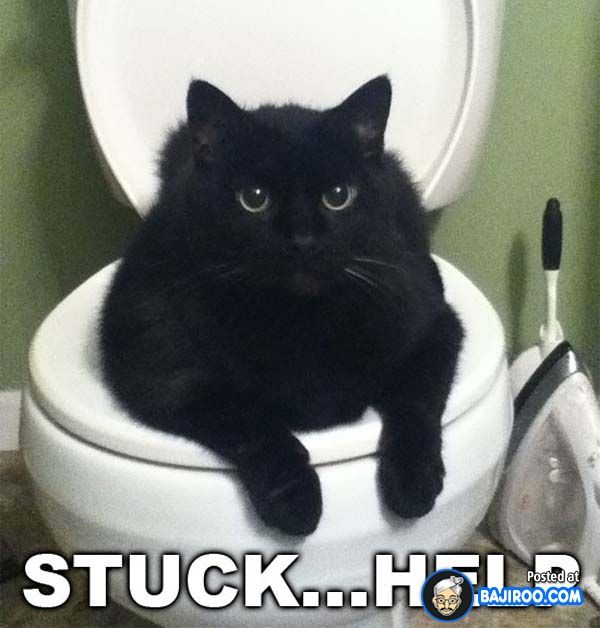 Funny Fun Humor Amazing Cats Cat Sitting Sit In Toilets