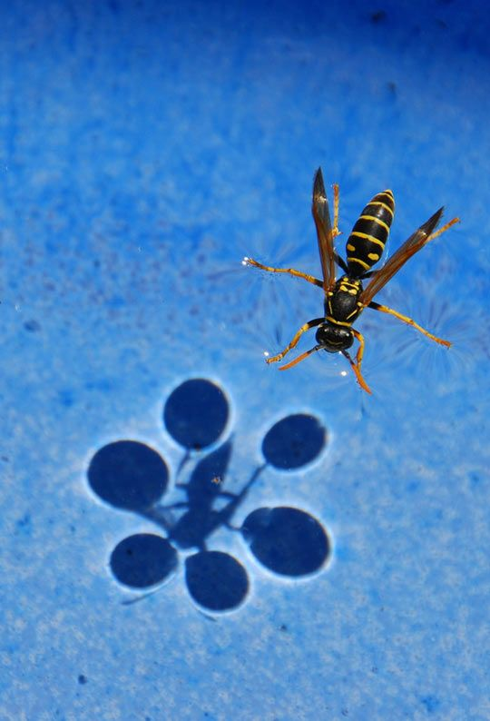Science subjects tutorials and lectures: surface tension.
