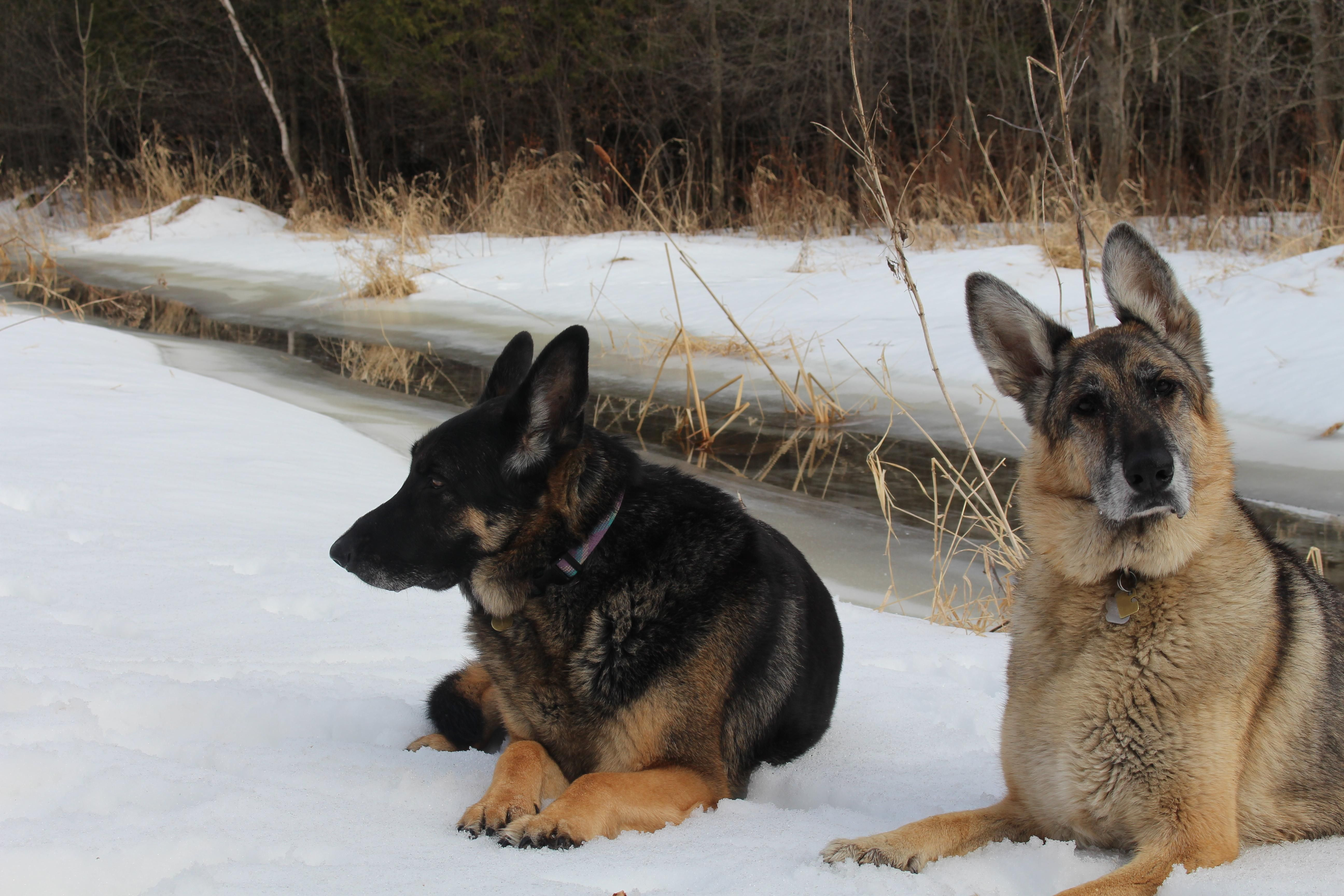Did You Say Something Storyful Dog Best Pinterest Dog Profile All German Shepherd German Blue German