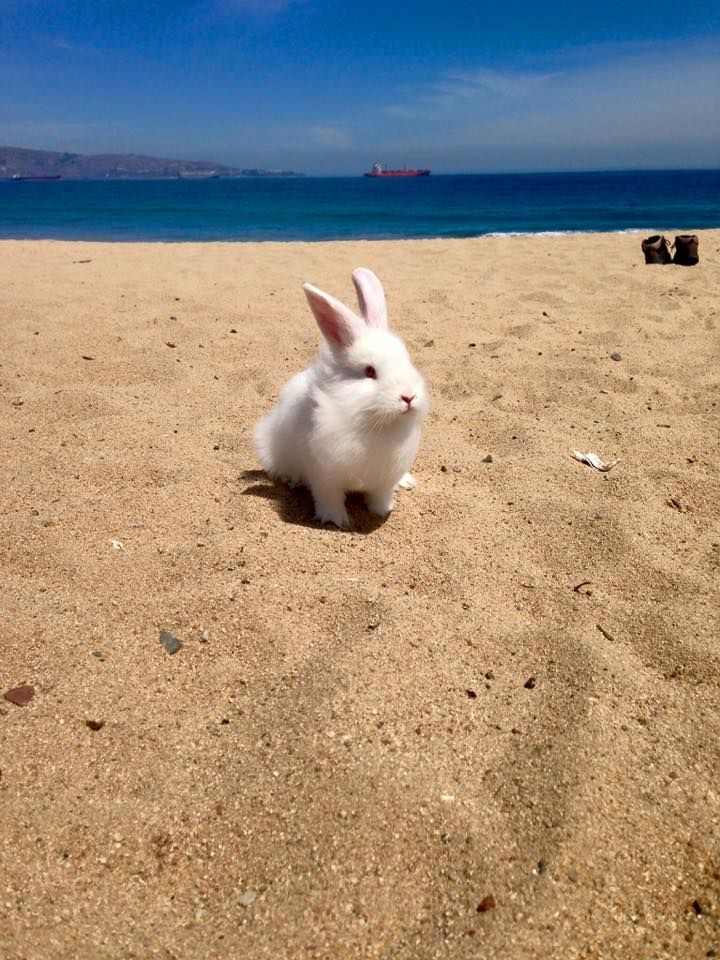 Beautiful Beach Bun