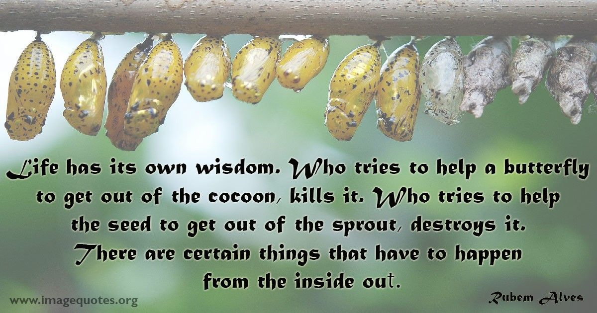 Cocoon Quotes: Life Has Its Own Wisdom Who Tries Help Butterfly ...
