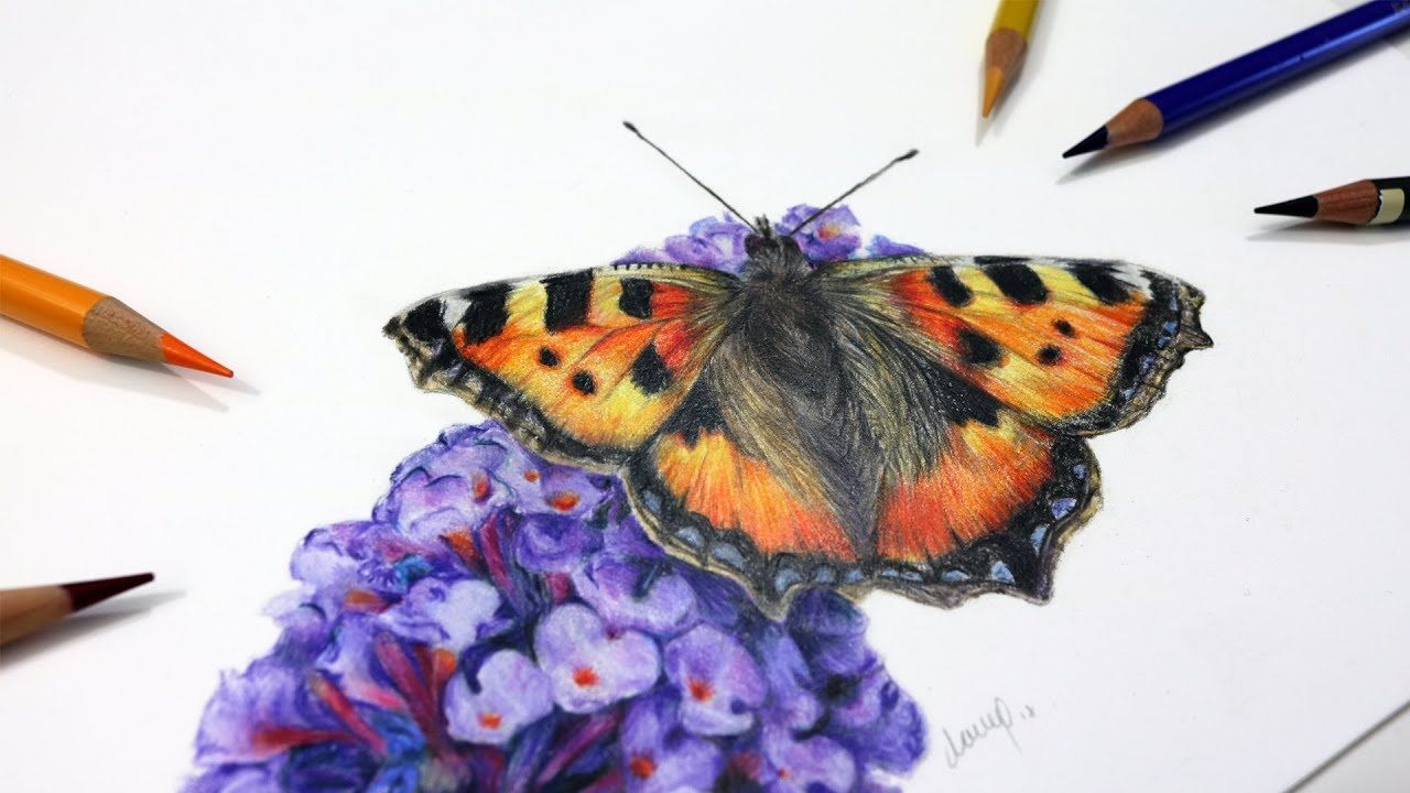 How To Draw A Butterfly With Coloured Pencils Drawing Tutorial Pencil Drawing Tutorials Pencil Drawings Colored Pencil Drawing