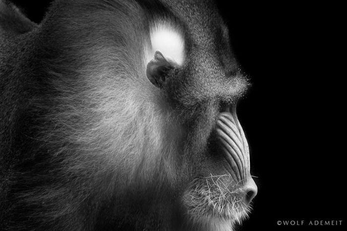 Прекрасные черно-белые фотографии - Zefirka