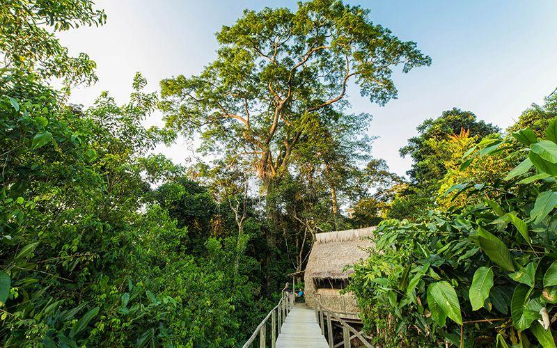 Ngaga Camp Accommodation | Odzala Discovery Camps