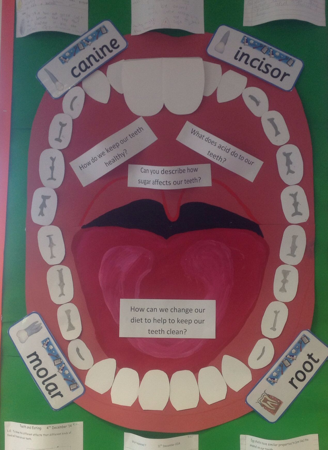 Classroom Display Science Healthy Eating Teeth