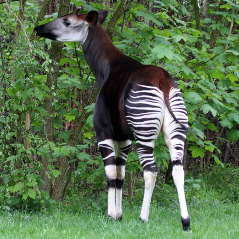 Top 10 Most Beautiful Endangered Animals in the World