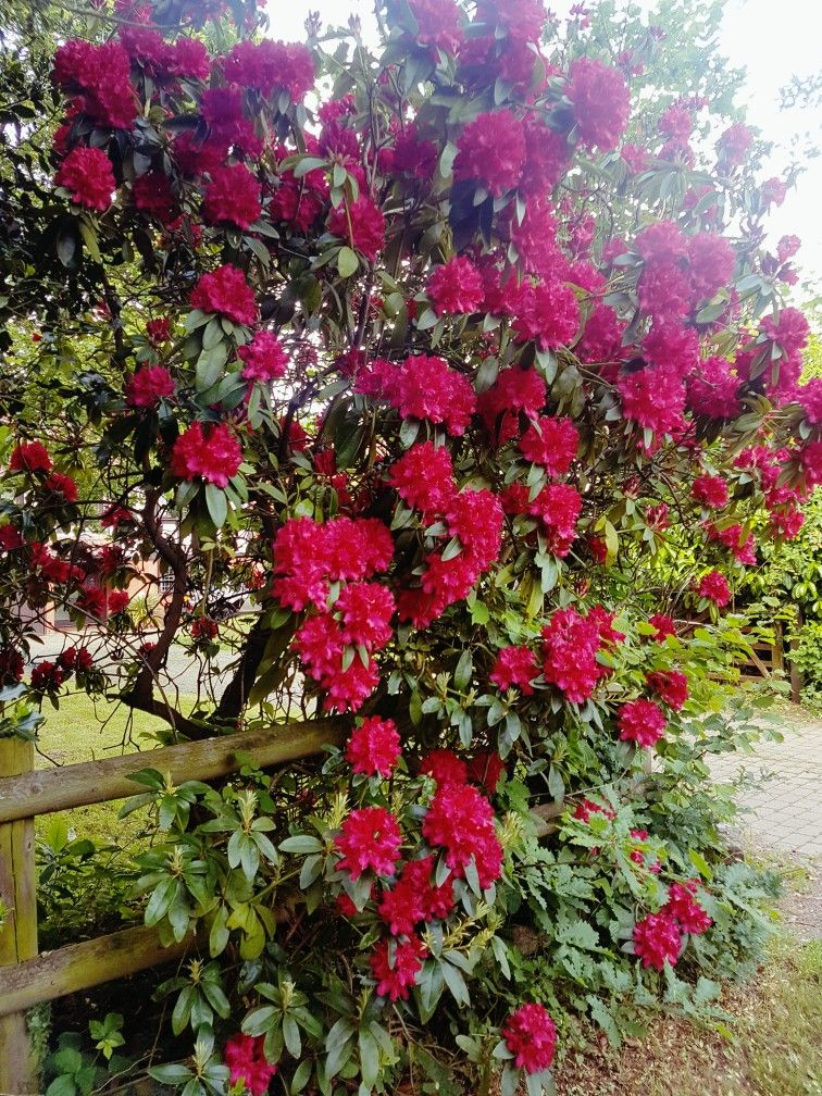 Pin by gbede bofesa on gardening Pinterest Gardens