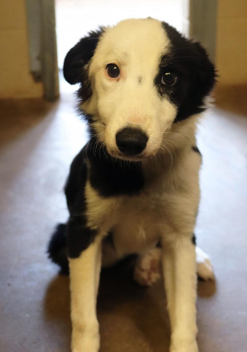 Adopt Sadie Cindy W Foster Puppy on Foster puppies