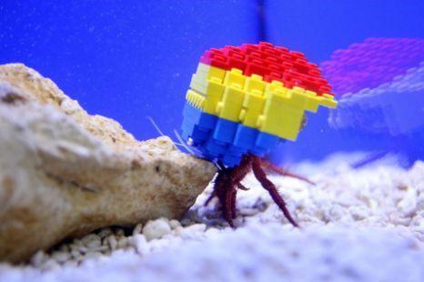 Harry, crab, Legoland