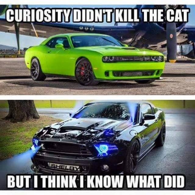 I D Like To See It Beat The Demon Cars Cars Mustang Muscle Cars